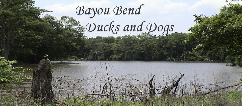 Bayou Bend Ducks and Dogs